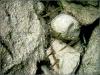 20070622_54114_traunblicke3-800x-p6040012