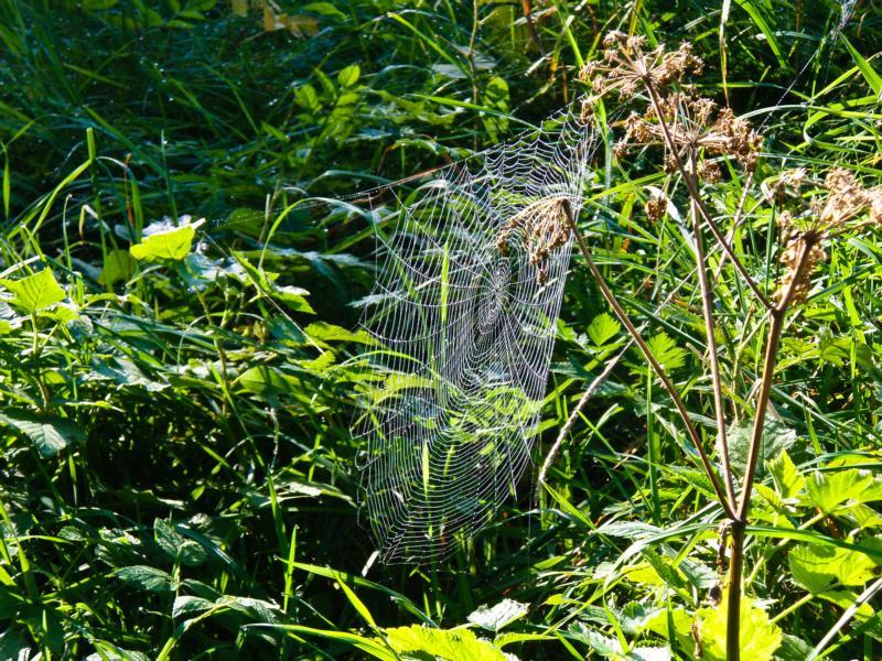 """Mit """"weiben"""" wurde im Althochdeutschen das Knüpfen der Spinnweben bezeichnet"""