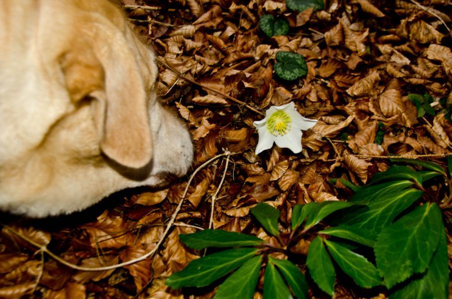 Tinka sucht die ersten Frühlingsboten