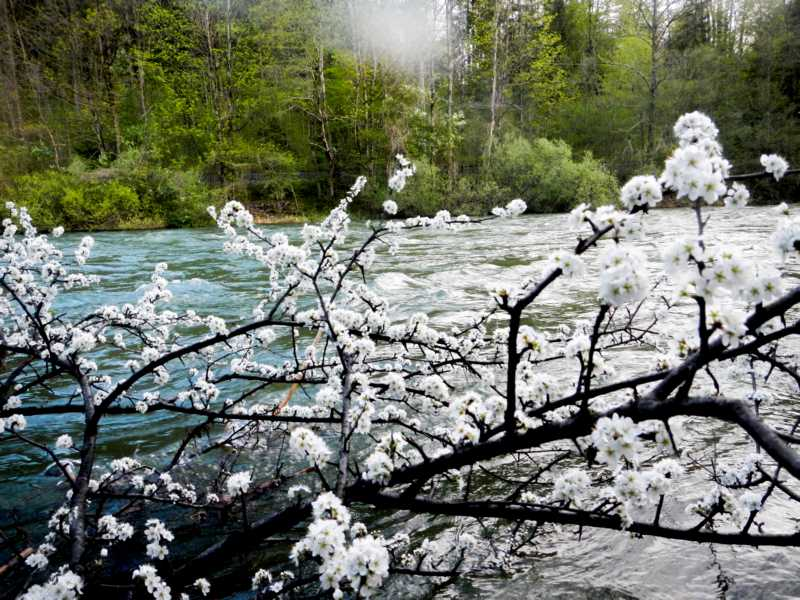 Der Frühling an der Traun...