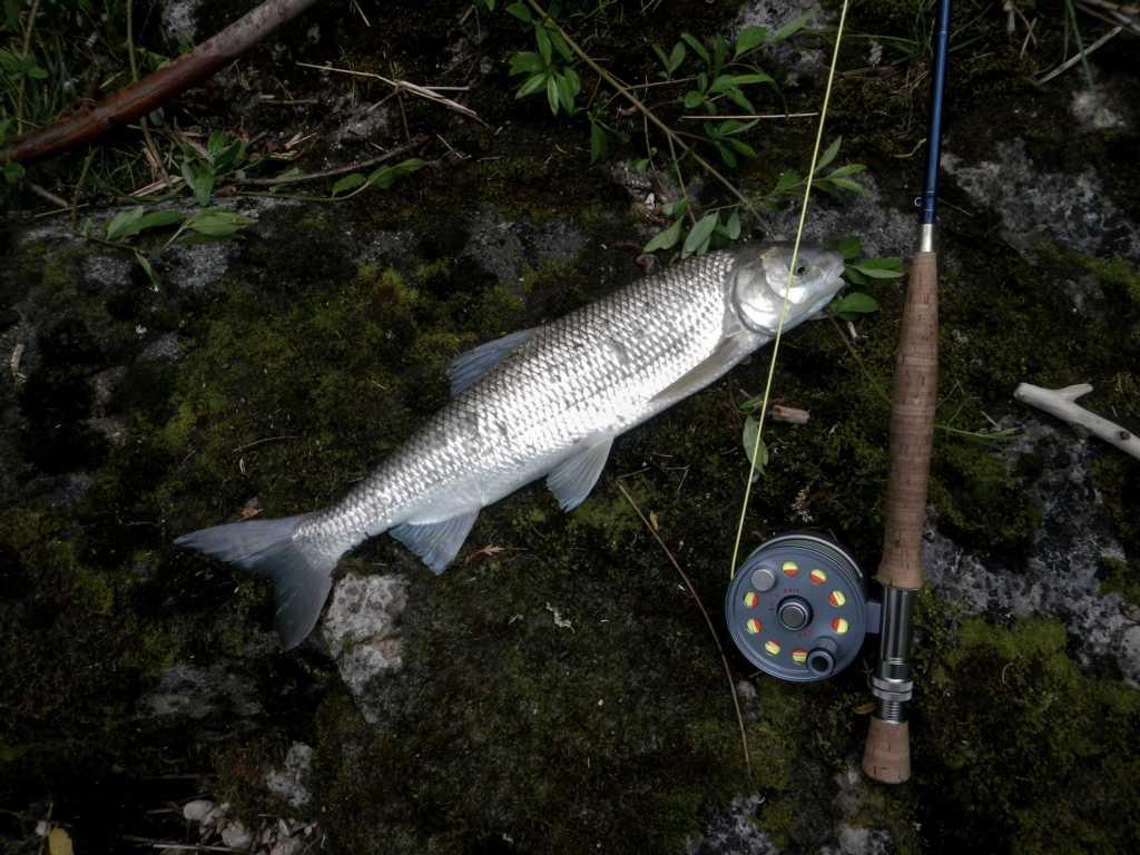 Perlfisch Fotoshooting bei der Ischl Mündung