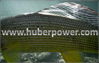 www.huberpower.com seit 2004 Online