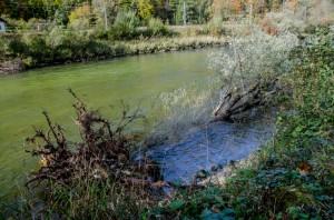 Totholzbaum bei Hochwasser