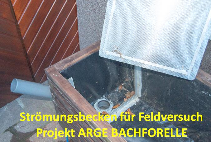 FELDVERSUCH_STROEMUNGSBECKEN3