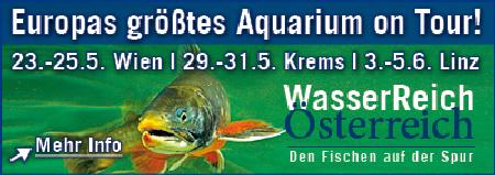 Banner Fische Schauen_quer450x