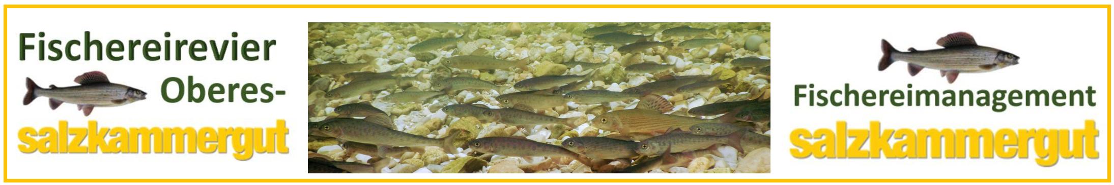 Fischereimanagement Salzkammergut